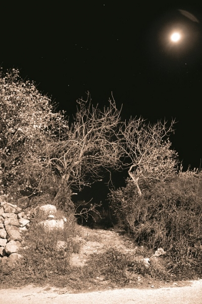 روان ناصر الدين